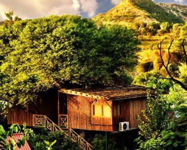 Three house resort boomhut
