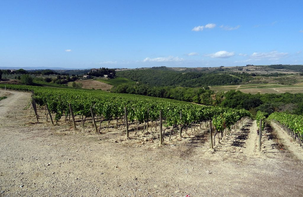 Vespa Trip Toscane - wijnveld